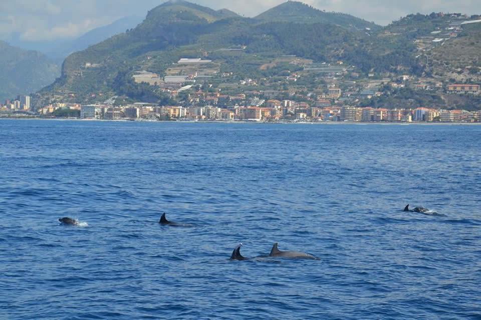 santuario dei cetacei tethys